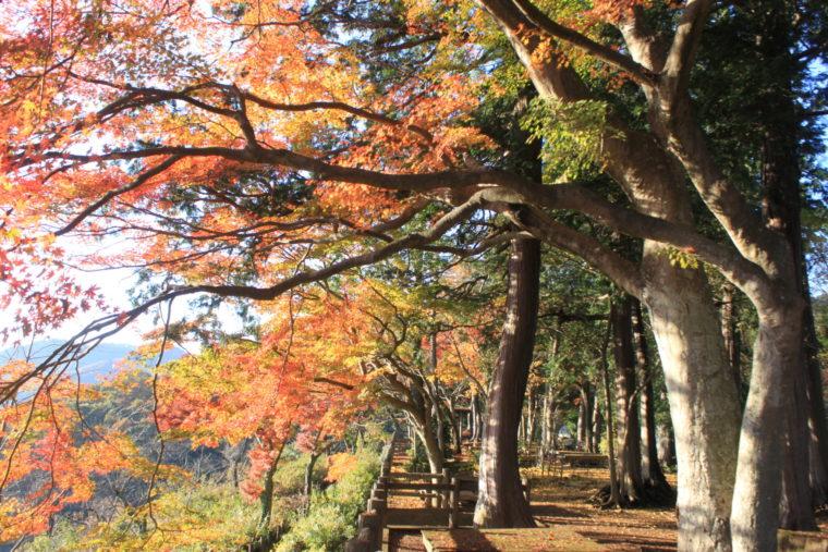 (太平山)紅葉 (3)