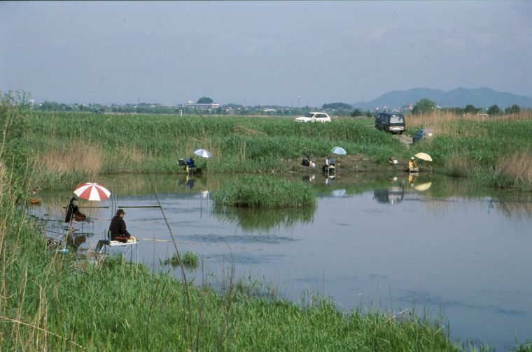 2渡良瀬遊水地4
