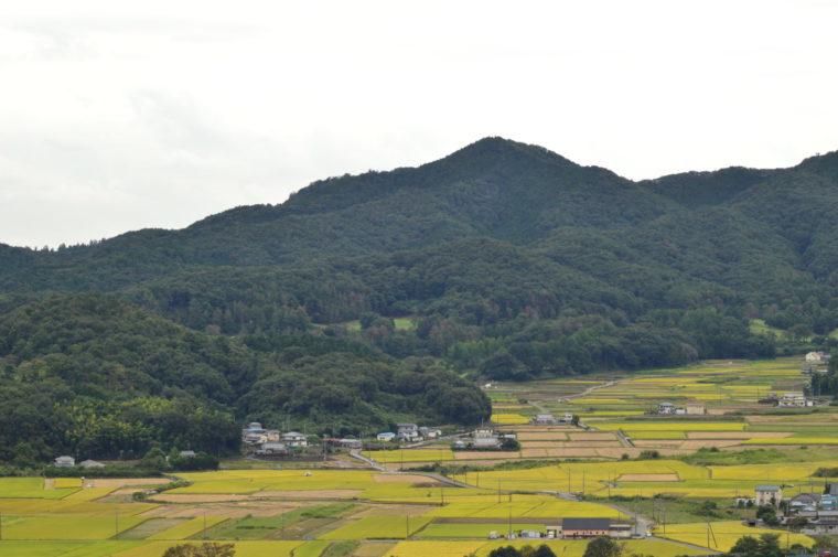 20190824皆川城址公園 (44)