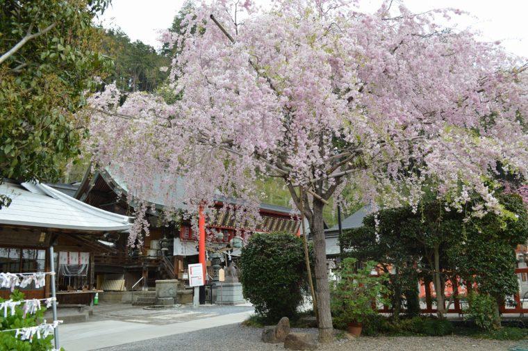 太平山神社 (5)