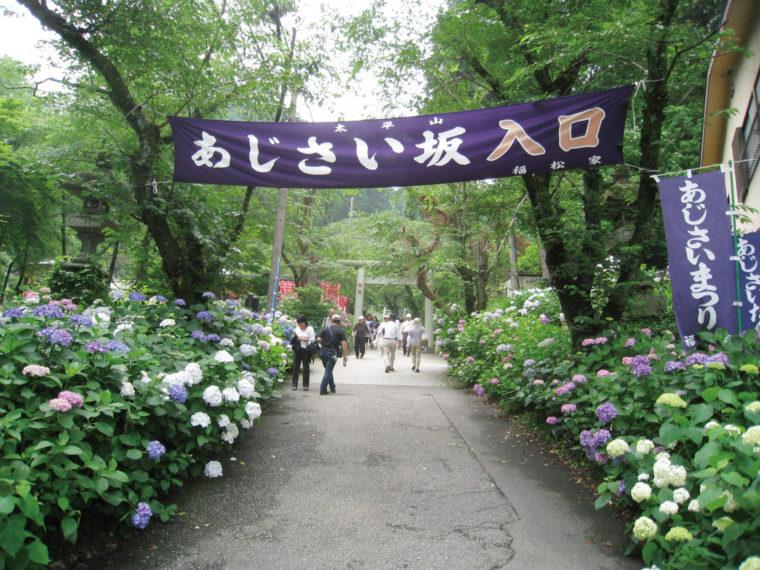 tochigi-ajisai_02